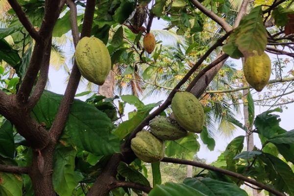 horticulture67C5F0702-EB52-60FF-8CE4-54D67805F250.jpg