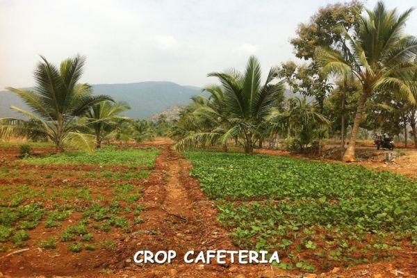 crop-cafeteria6F732B9C-0702-4376-5F2E-79770840B779.jpg