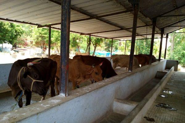 dairy-farm-1EFA20C3D-DCC4-3CD3-0985-EFB2135C997A.jpg