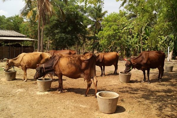 dairy-farm-27B2766AA-67AF-1AE8-1A8B-E179517547A4.jpg
