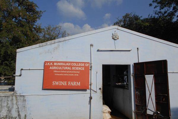 swine-farm001EB211-B2D5-4AD1-F0A5-991902C4F1D3.jpg